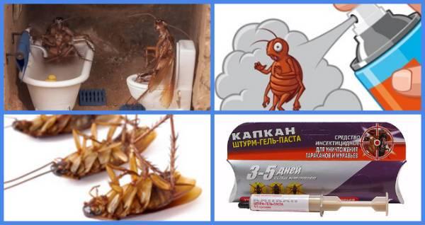 Как избавиться от тараканов в общежитии (общаге): список способов