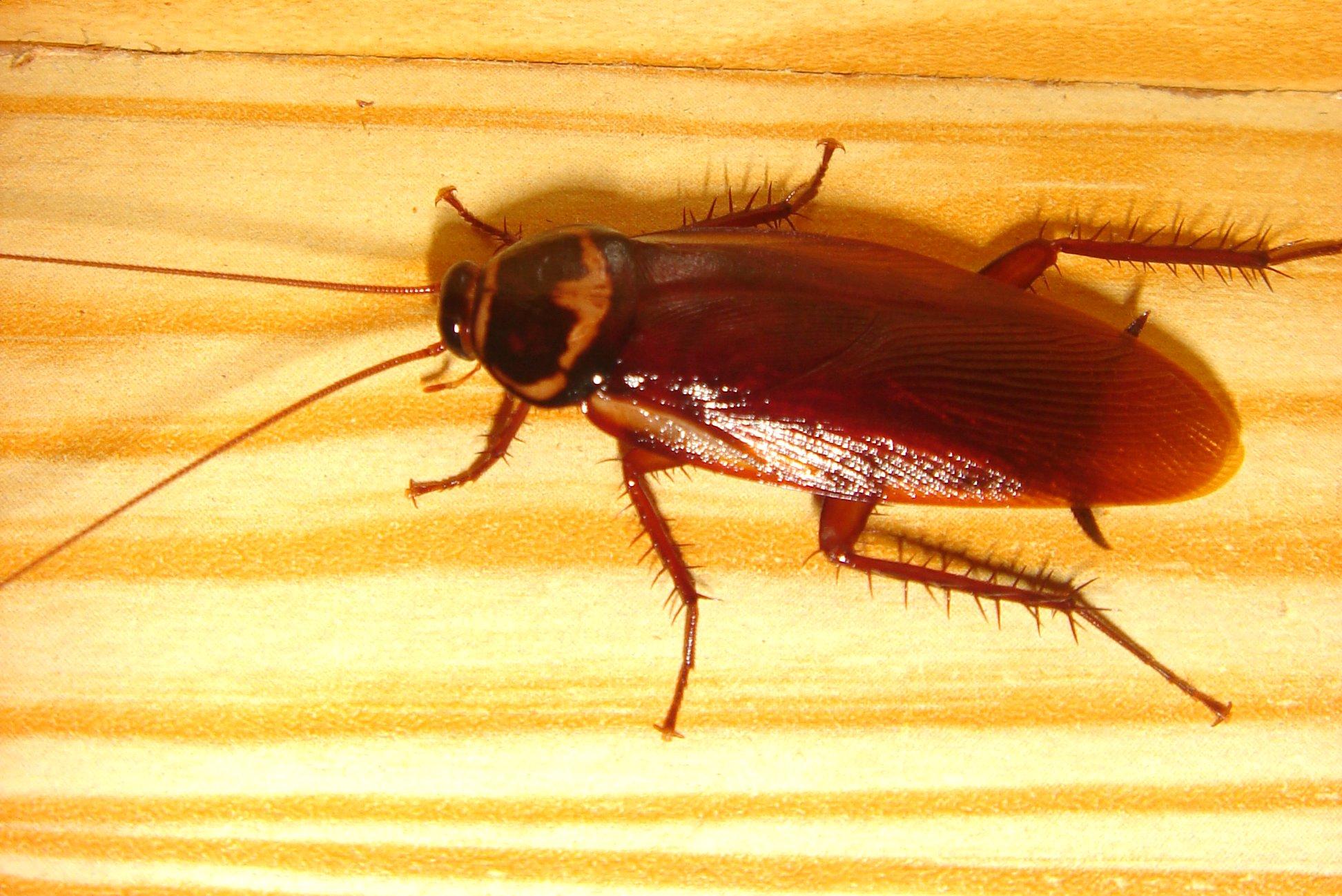 Почему тараканов называют стасиками – 4 причины появления прозвища