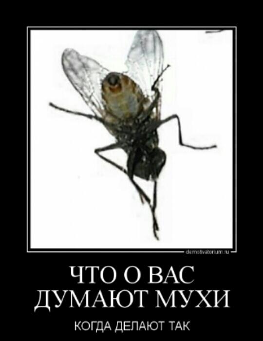 Почему мухи кусаются, особенно, в конце лета? / как избавится от насекомых в квартире