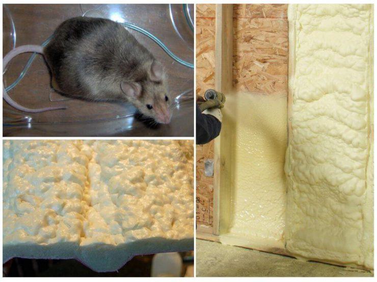 Какой утеплитель не грызут мыши и крысы – видеообзор, отзывы строителей