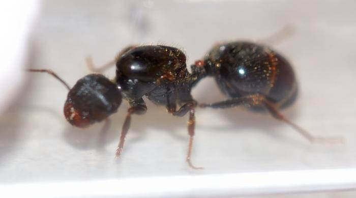 Что видят слепень, клещ и муравей