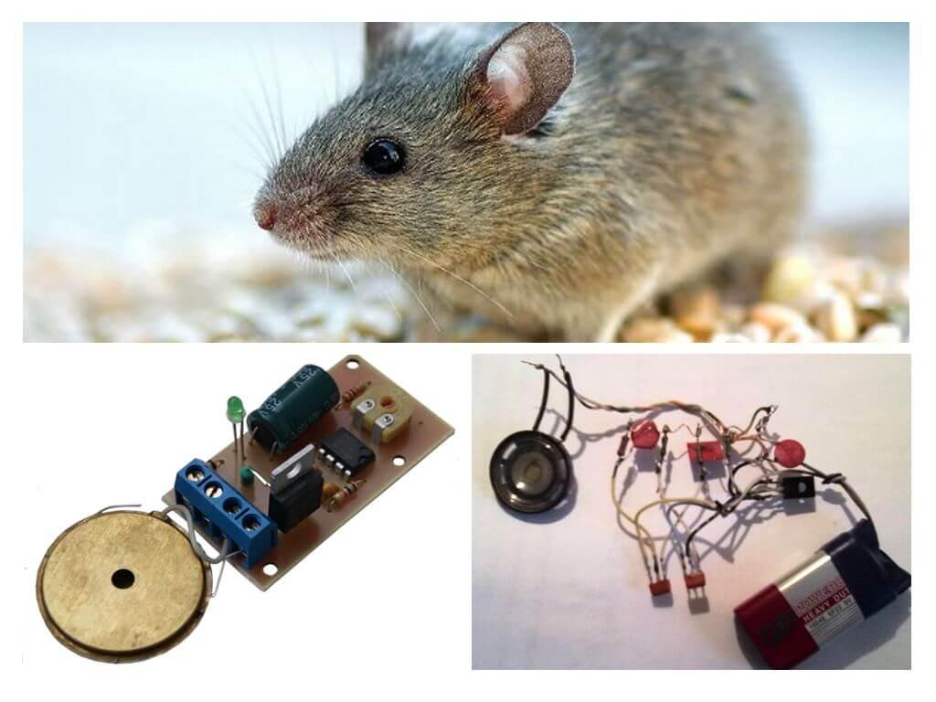 Ультразвуковой отпугиватель своими руками - от мышей, крыс (грызунов), кротов