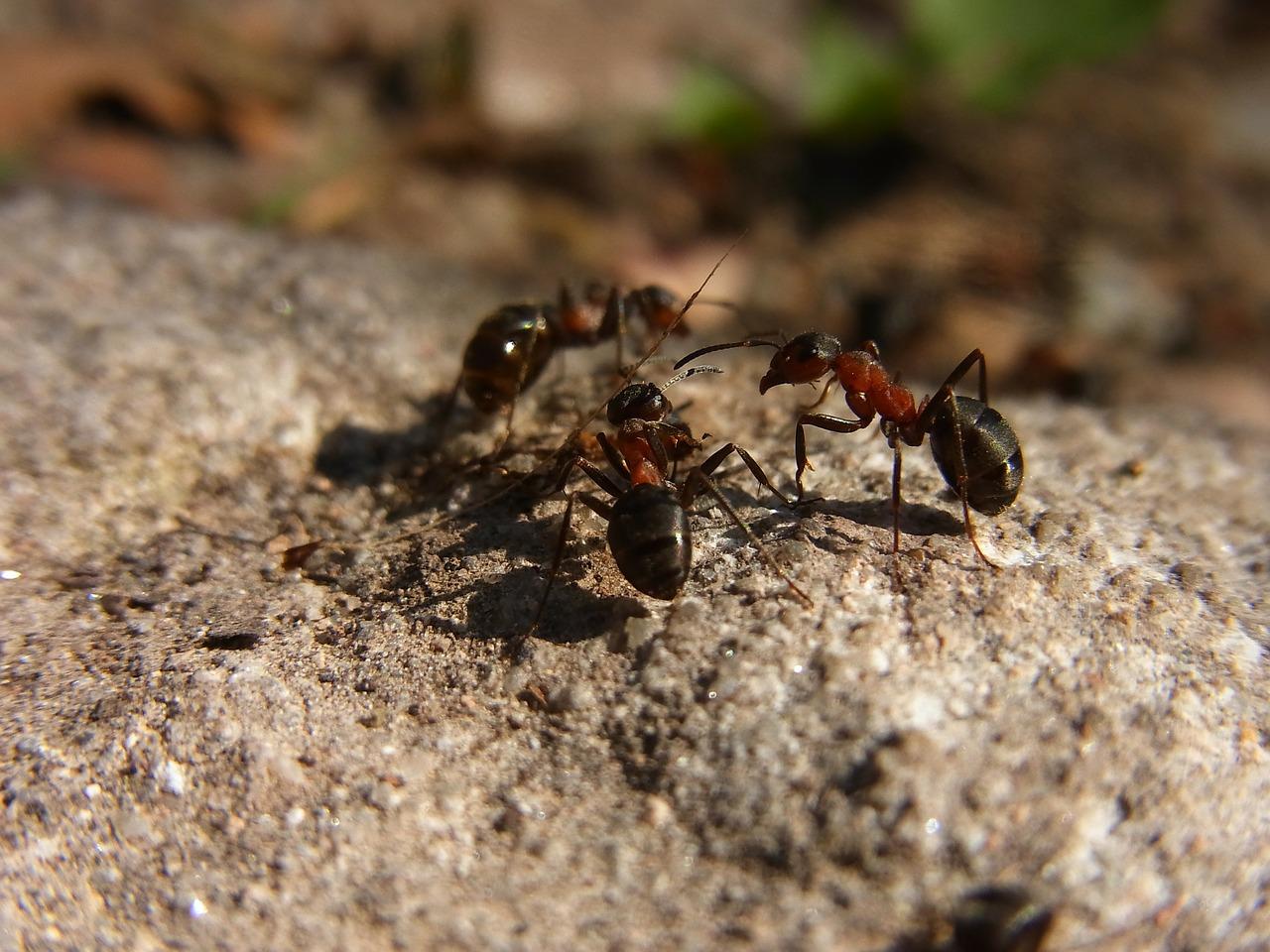 Враги надоедливых насекомых — кто ест муравьев?