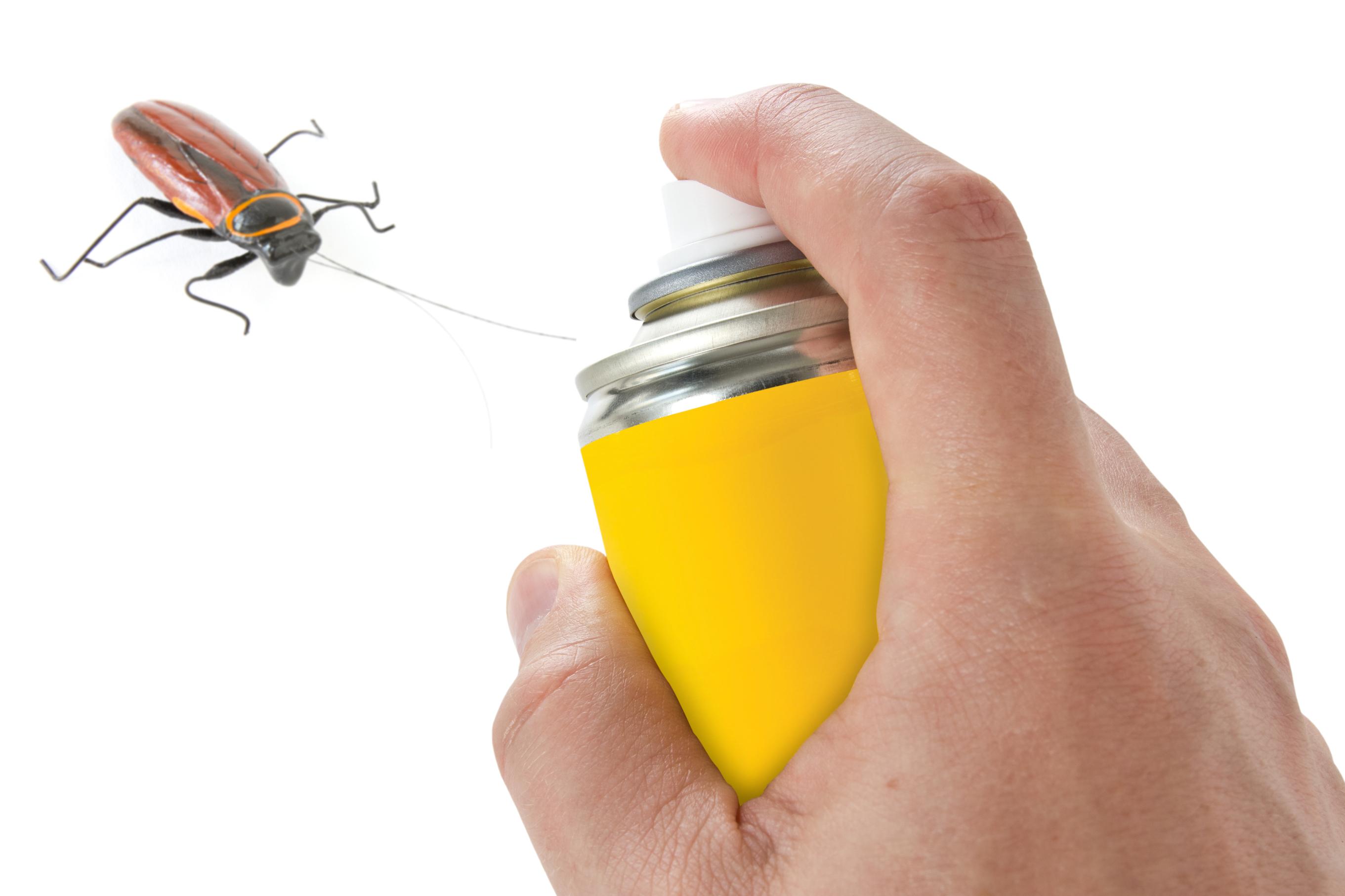 Выбираем самое эффективное средство от тараканов