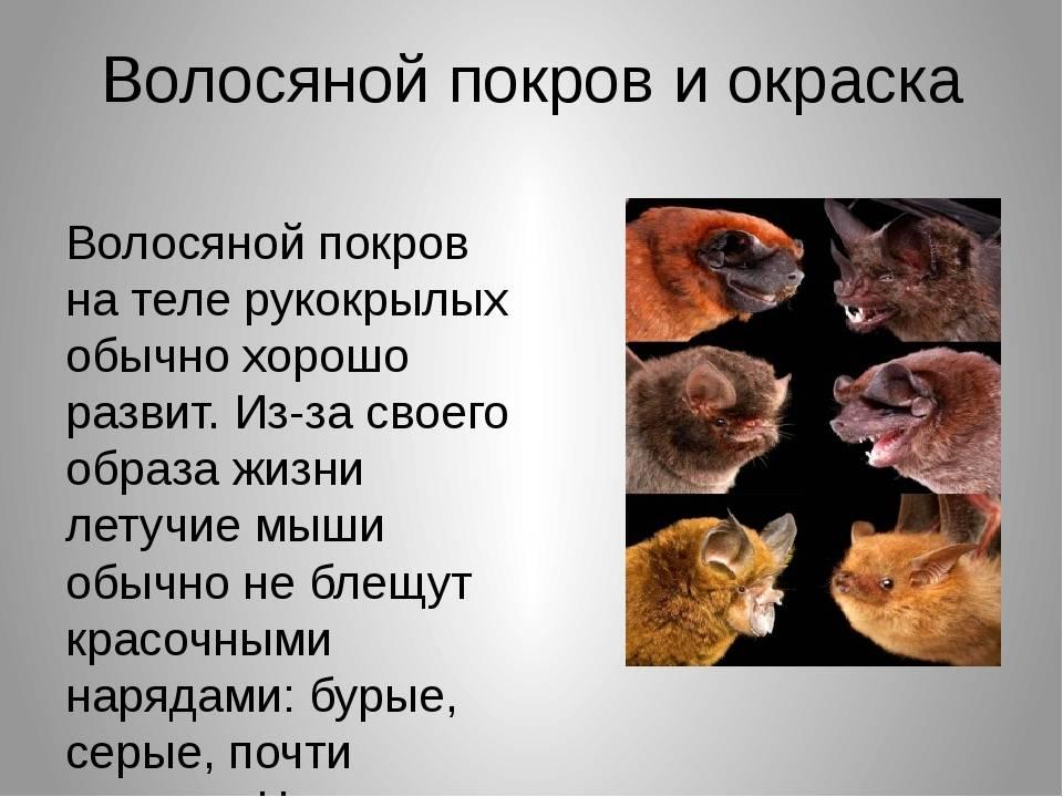 Кузнецов б.а. определитель позвоночных животных фауны ссср. млекопитающие. класс млекопитающие. отряд грызуны - электронная биологическая библиотека