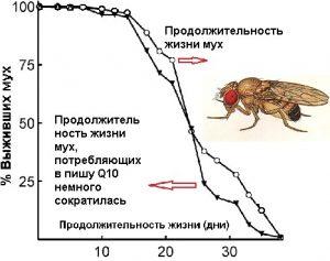 Сколько муха может прожить без еды. сколько живут мухи разных видов