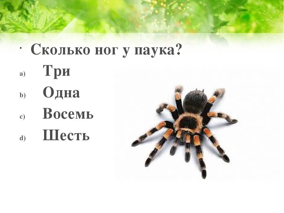 Интересные факты о пауках - анатомия, физиология, размножение, паутина