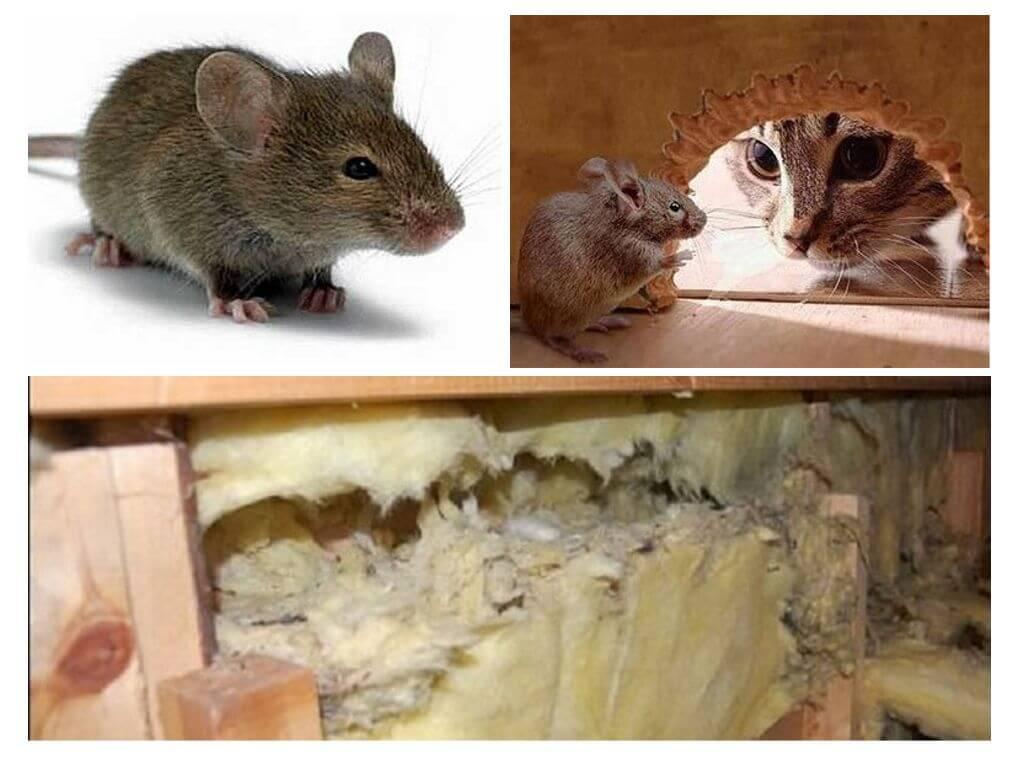 Какой утеплитель не грызут мыши и крысы: топ материалов