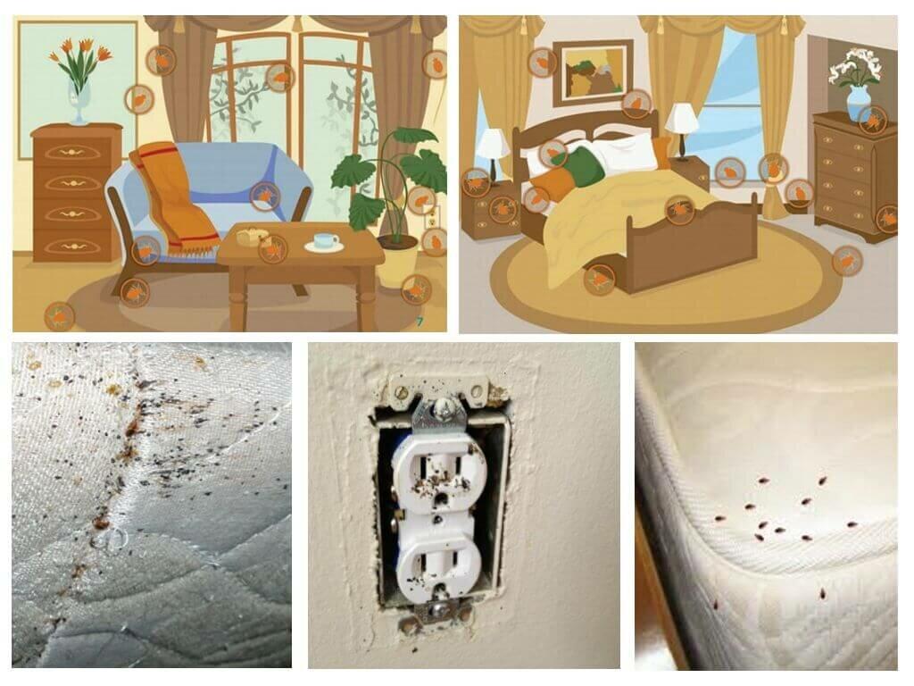 ❶ как найти и обнаружить гнездо постельных клопов в своей квартире самостоятельно