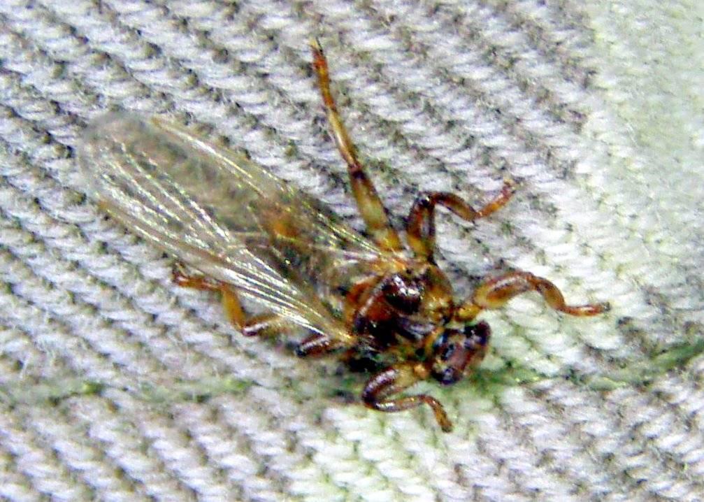 Симптомы и лечение укусов мух. почему мухи кусаются осенью? зачем кусают мухи