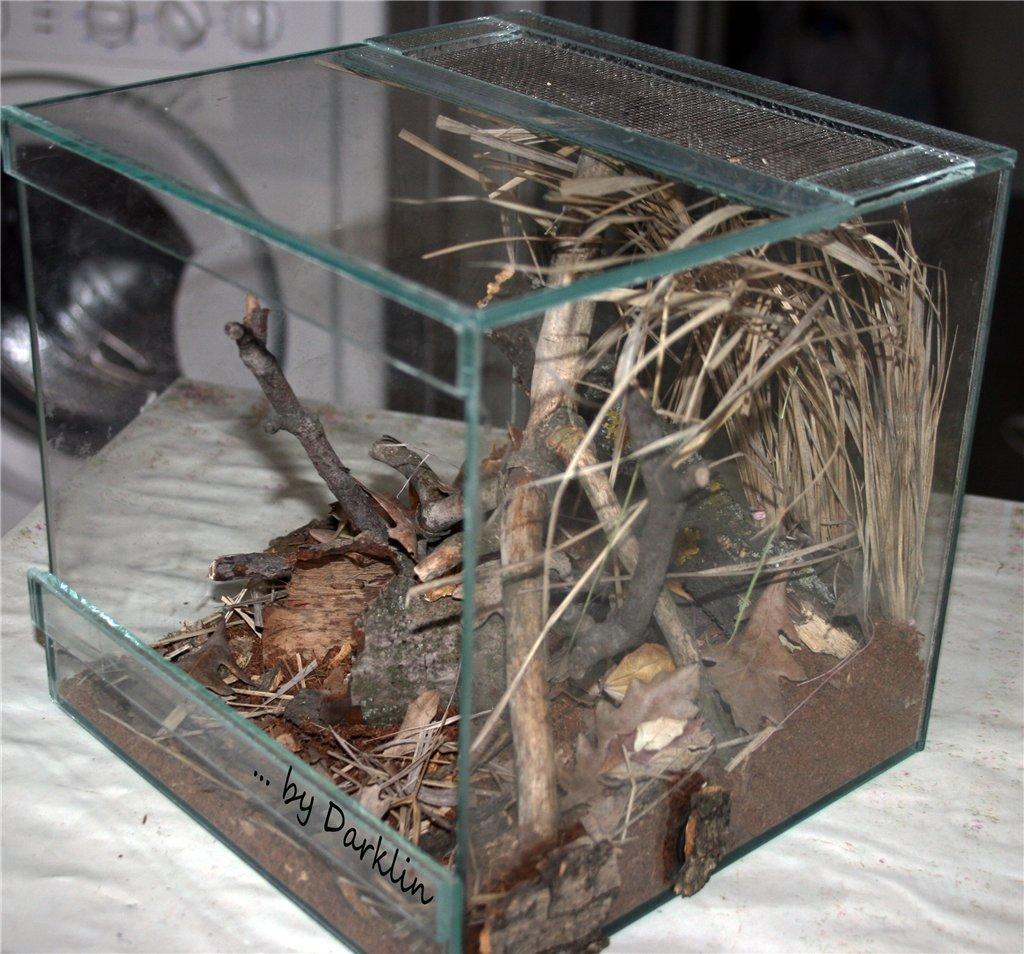 Преимущества и недостатки содержания пауков