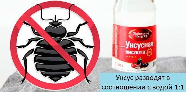 Чем отпугнуть тараканов запахи и звуки которые заставят насекомых бежать из квартиры