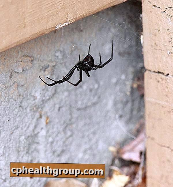 Как избавиться от пауков в частном доме?