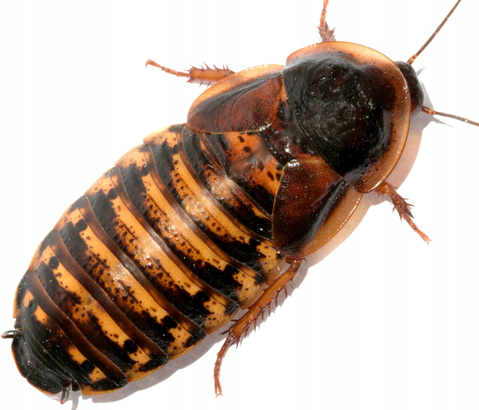 Спреи и аэрозоли от тараканов