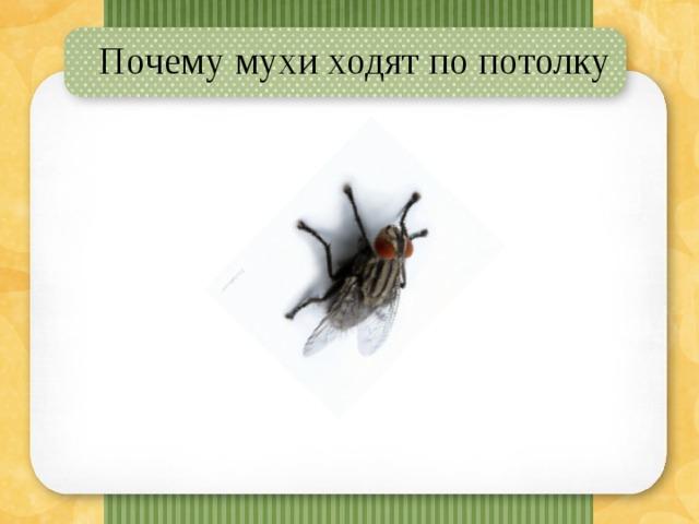 Исследовательская работа на тему » почему муха не падает с потолка»