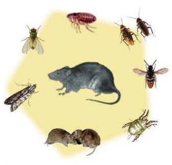 От соседей ползут тараканы: что делать с этим, почему насекомые бегут к вам и какие меры предпринять, чтобы они исчезли? русский фермер