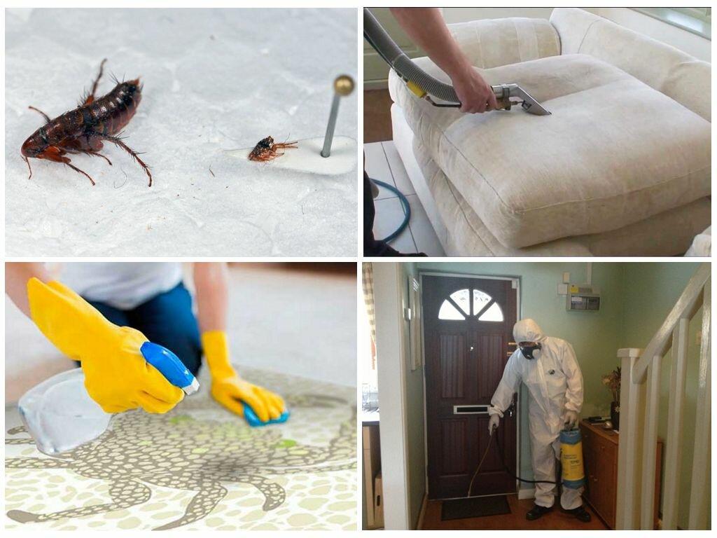 Специализированные службы для травли тараканов в квартире. чем и как травить самому?