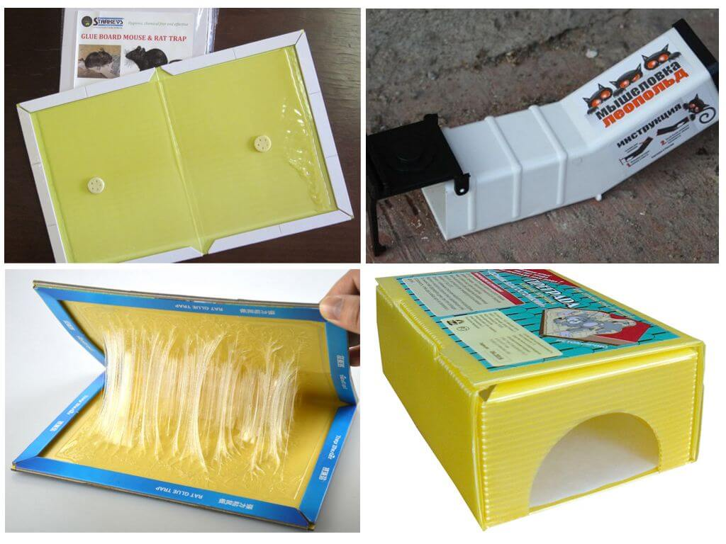 Чем отмыть клей для мышей с кошки, пола, мебели, одежды