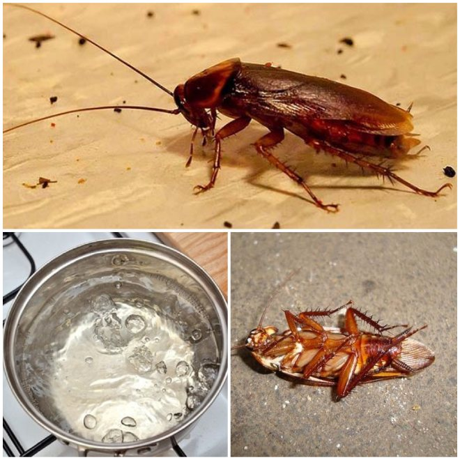 Какой запах не переносят тараканы больше всего, чем лучше обрабатывать квартиру