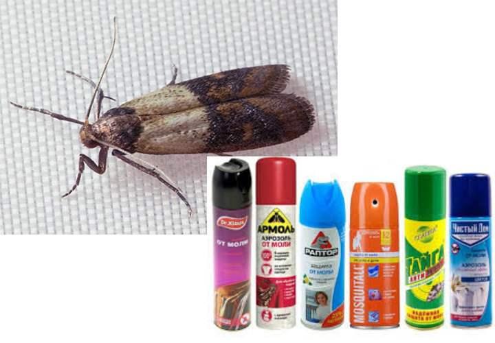 9 народных средств от насекомых в квартире