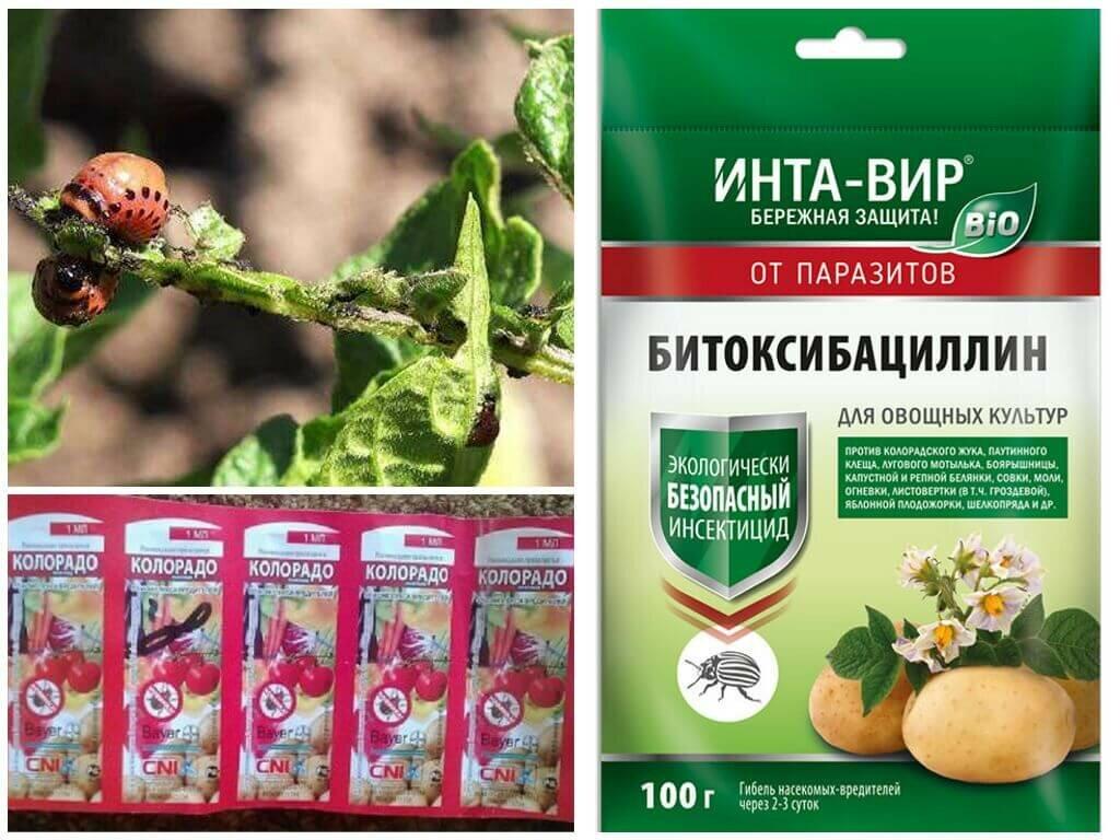Как выбрать лучшую отраву для колорадского жука?