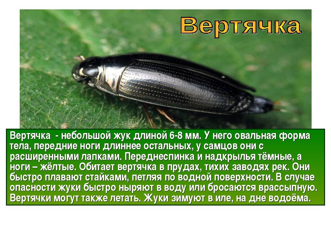 Вертячка поплавок: внешний вид и особенности образа жизни водного жука