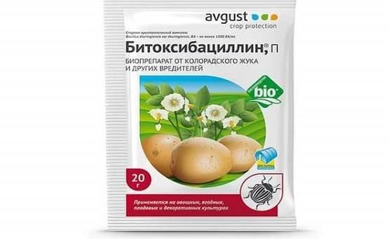 Картофельная моль – 6 главных особенностей и описание борьбы с вредителем