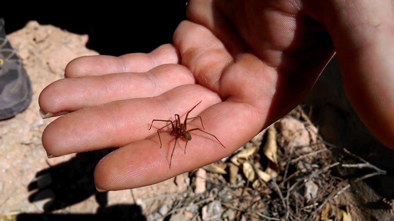 Что делать при укусе паука: определяем вид и помогаем грамотно!