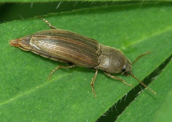 Методы борьбы с малиновым жуком