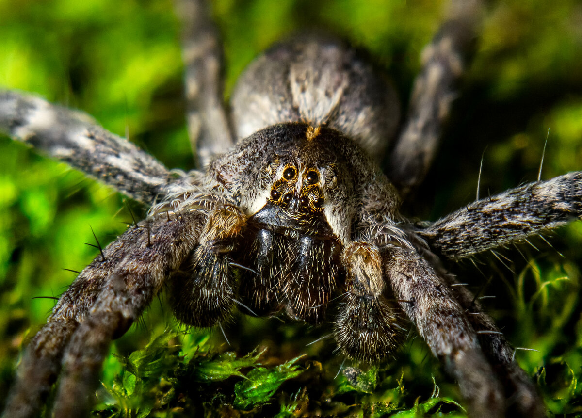 Правила содержания паука в домашних условиях