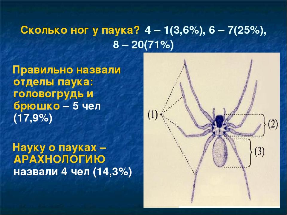Сколько ног у паука и зачем они нужны насекомому