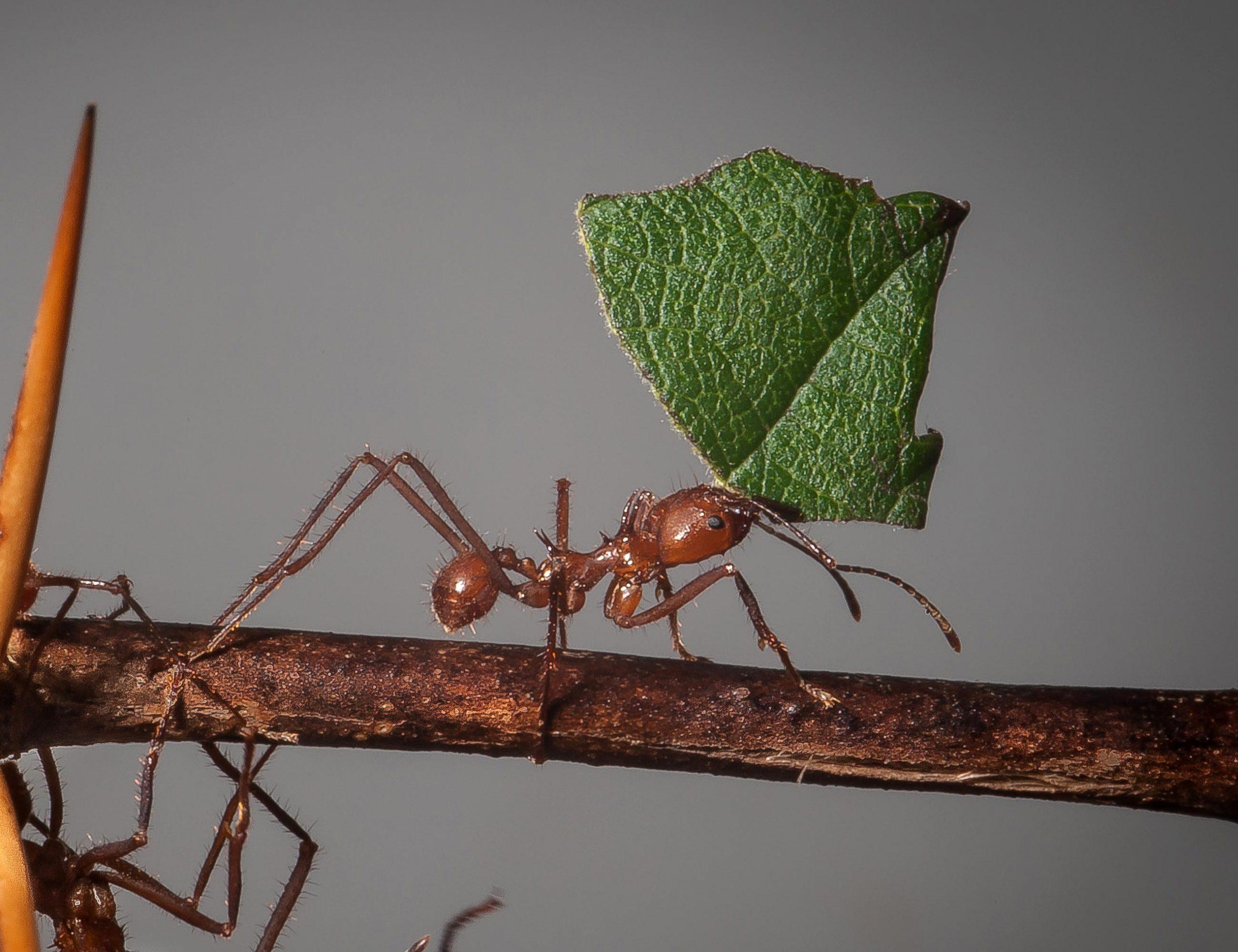 Почему появляются муравьи на участке и еще немного советов по избавлению от них. обсуждение на liveinternet