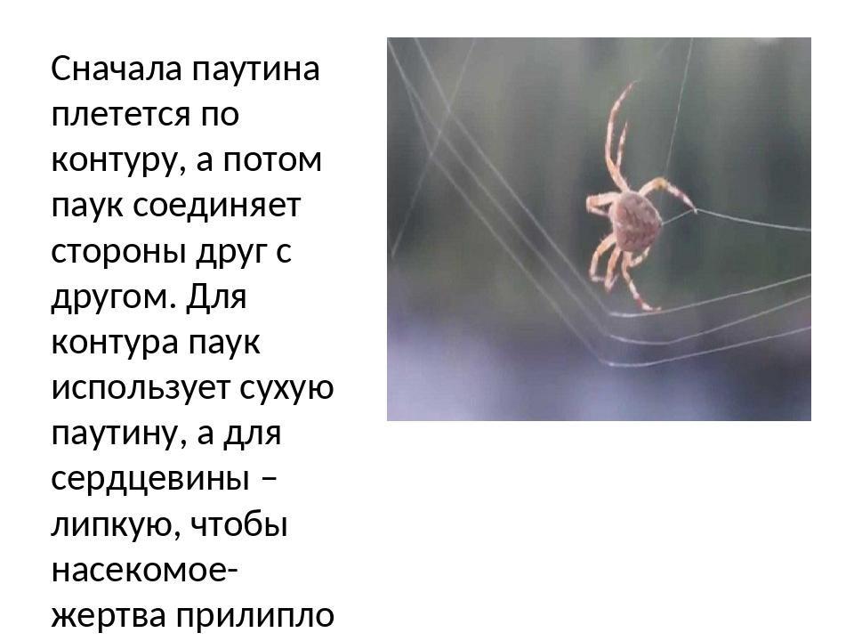 Паутина пауков – для чего и зачем нужна паутина