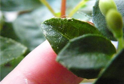 Как бороться с паутинный клещем на огурцах