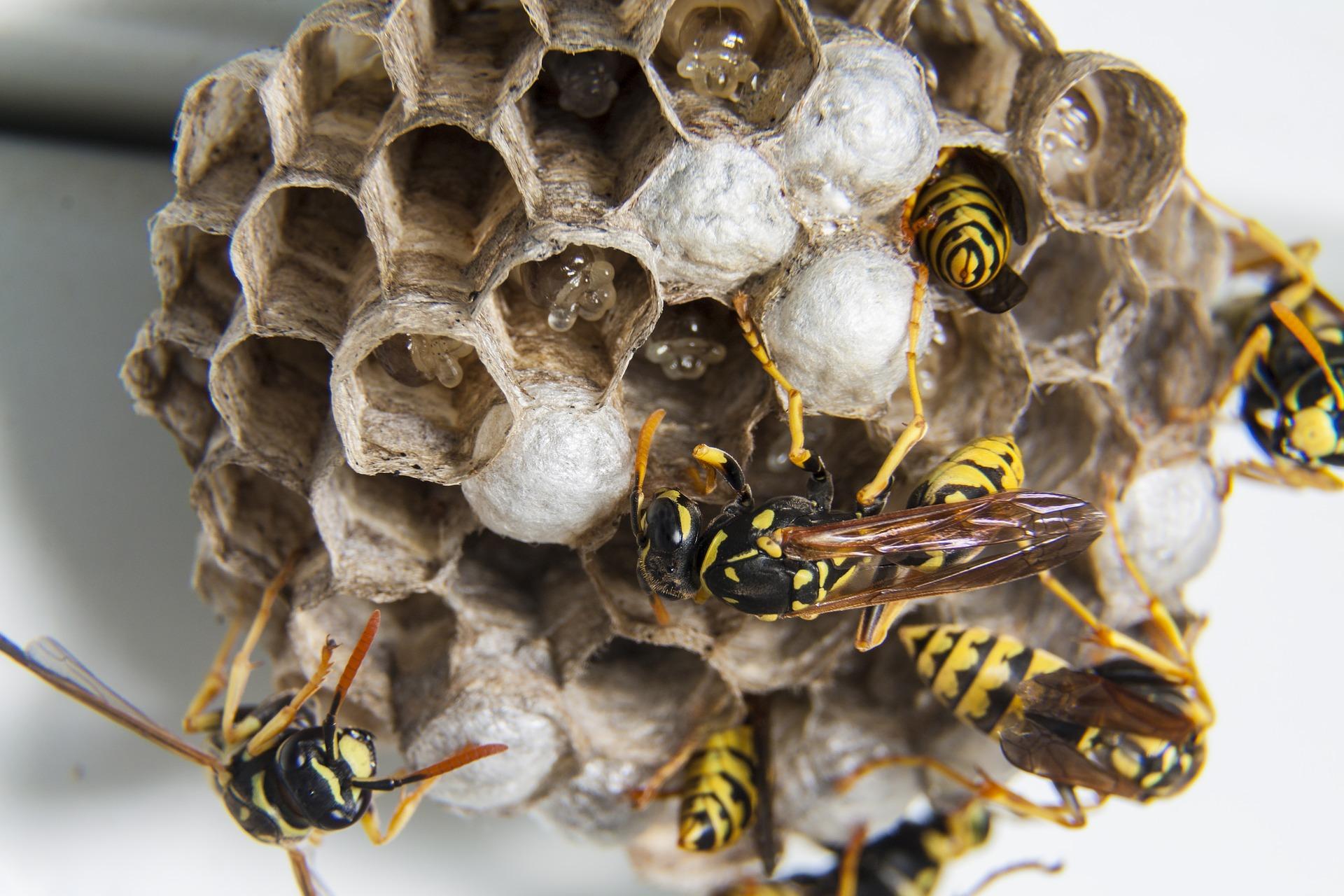 ✅ как избавиться от осы в квартире, почему осы залетают в квартиру, как избавиться - tehnomir32.ru