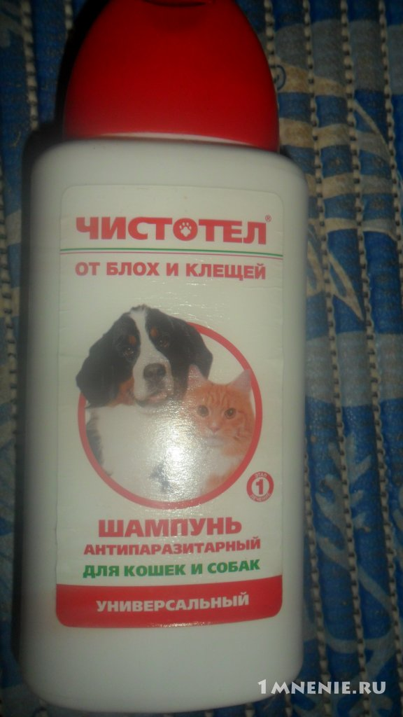 Шампунь для собак: как правильно мыть, как часто надо, можно ли мыть человеческим шампунем