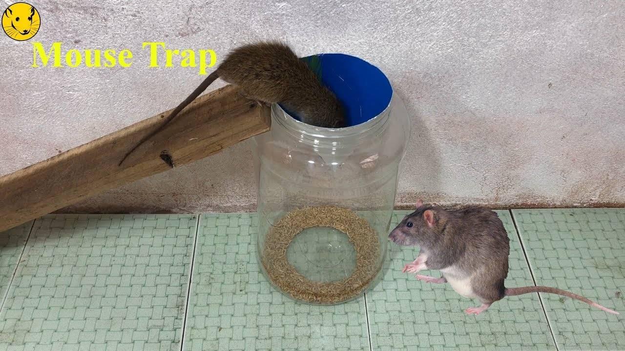 Как поймать крысу с помощью крысоловки в домашних условиях