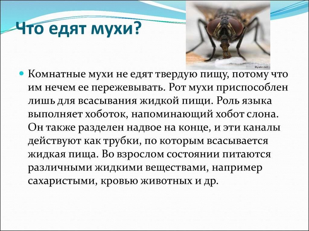 Муха - 82 фото крайне распространенного источника заразы