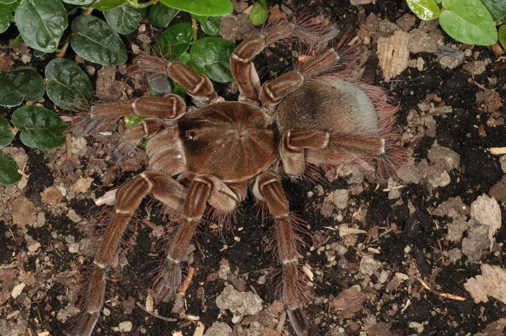 Самые большие пауки в мире: топ10 с фото и названиями