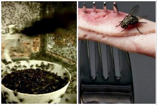 Самые эффективные средства для уничтожения мух на даче или на участке