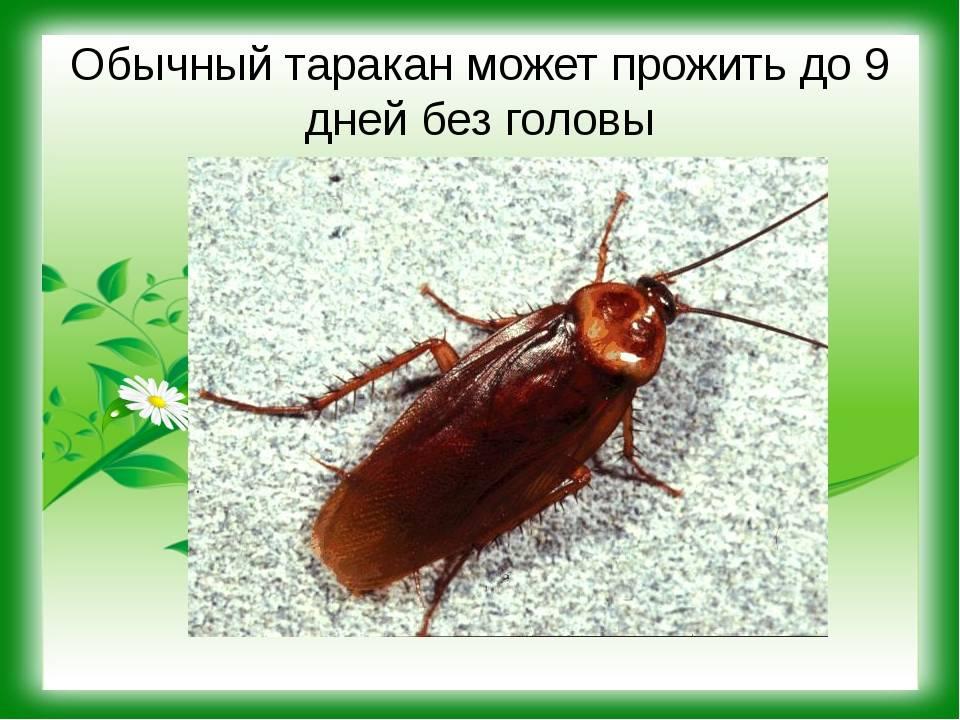 Сколько живут тараканы | дачная жизнь