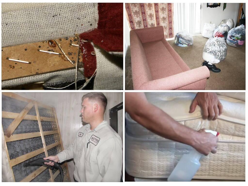 В квартире клопы: как избавиться навсегда самостоятельно