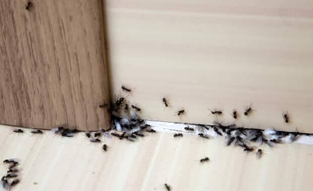 Как избавиться от муравьев в доме: полезные советы от блога comfy