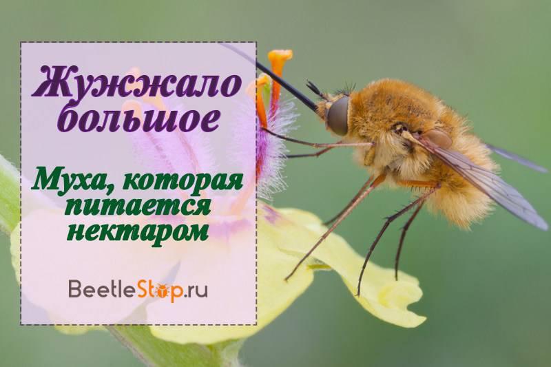 Способы размножения и этапы развития насекомых: фото яиц, виды личинок и куколок, состояние диапаузы