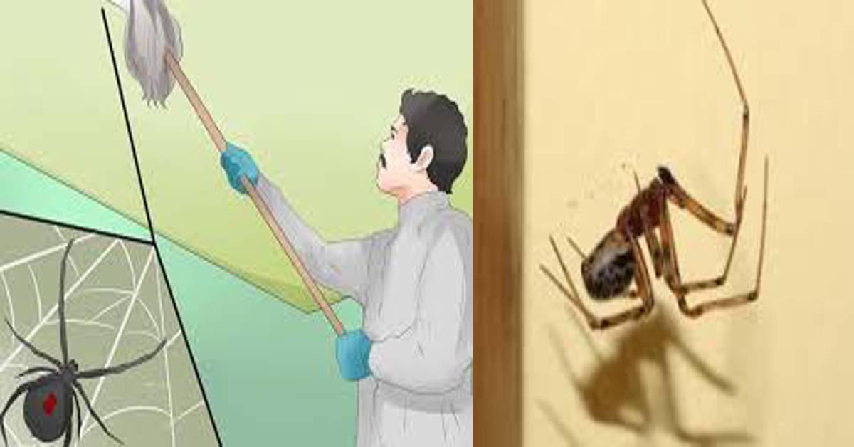 Как отпугнуть и чем потравить пауков в квартире и в частном доме
