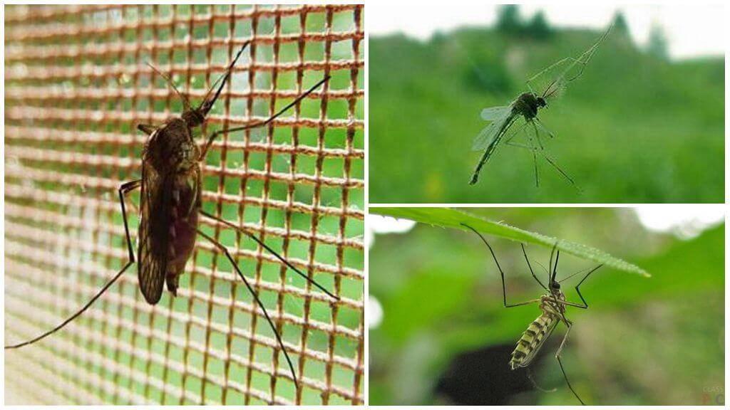 До какого этажа долетают комары
