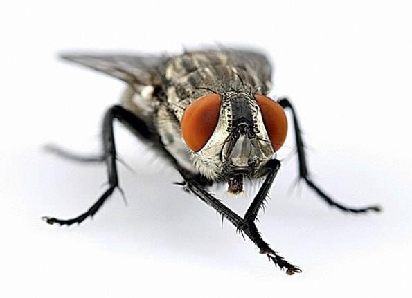 Почему мухи лапки моют. для чего мухи потирают лапками? среднее время прочтения:   интересные факты