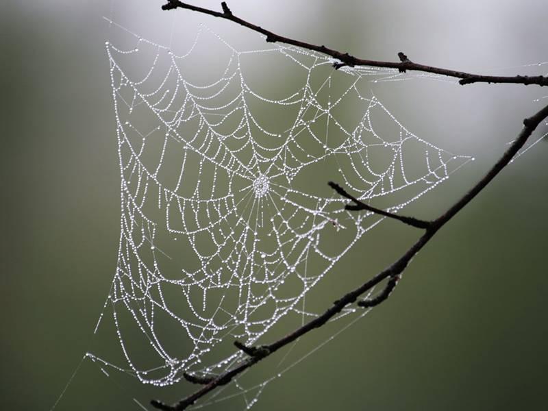 Деревья в паутине: выбор препарата