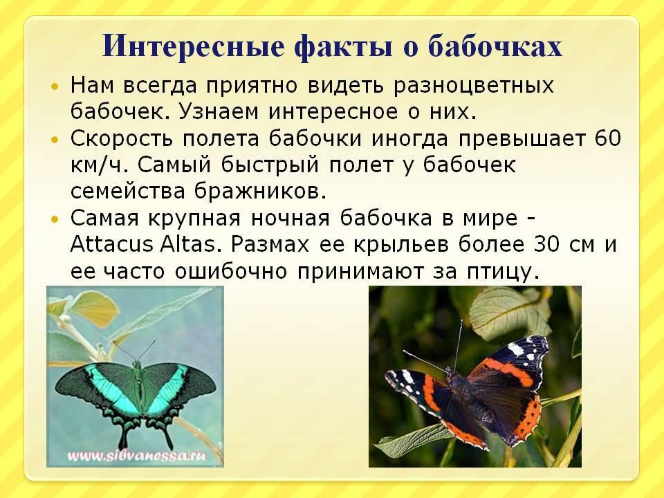 Бабочки — польза или вред |  новости сибирской науки