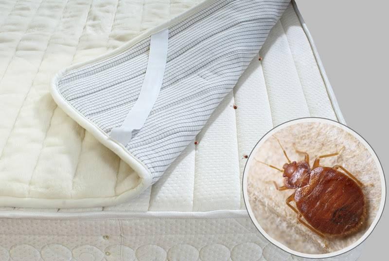 Чем обработать диван от блох. как выявить и вывести блох из ковра